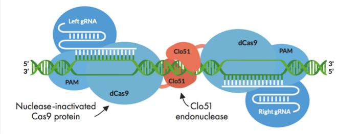 Figure 1: Schematic depiction of Cas-CLOVER principle.